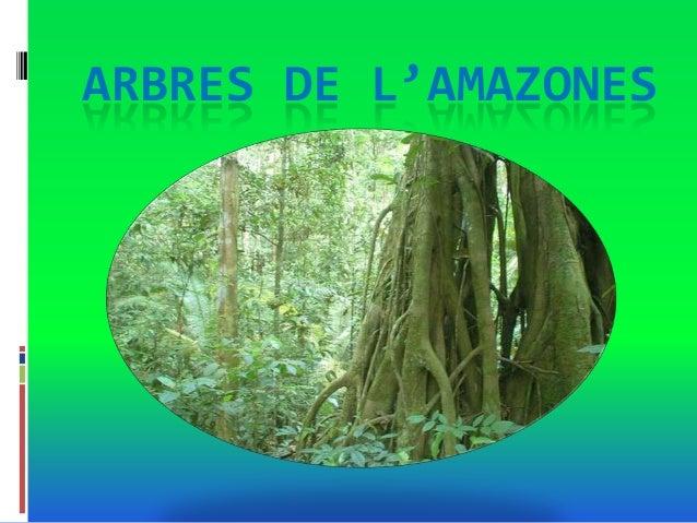 ARBRES DE L'AMAZONES