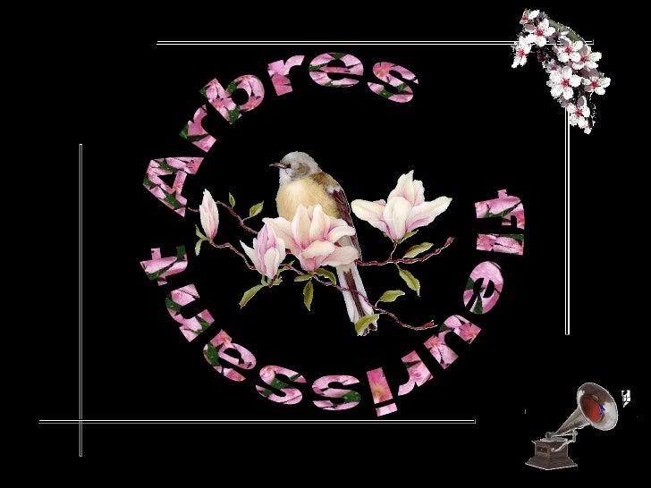 Arbres  fleurissant