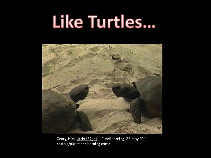 Like Turtles…<br />Geary, Nick. gtrln125.jpg. . Pics4Learning. 26 May 2011 <http://pics.tech4learning.com><br />