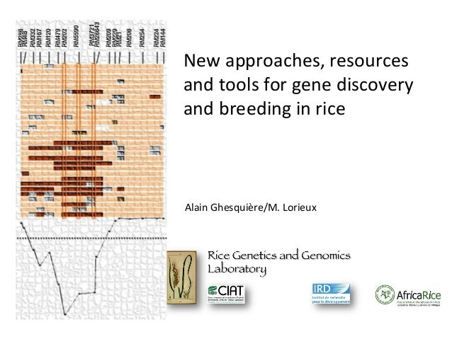 New approaches, resources and tools for gene discovery and breeding in rice  Alain Ghesquière/M. Lorieux