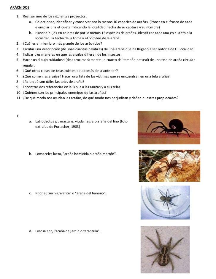 ARÁCNIDOS  1. Realizar uno de los siguientes proyectos:          a. Coleccionar, identificar y conservar por lo menos 16 e...