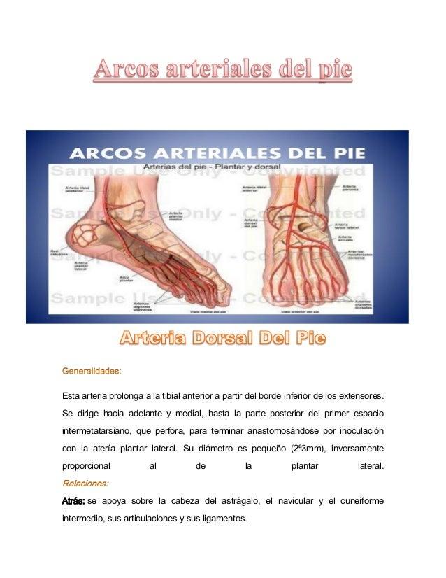Arcos arteriales de la mano y de los pies