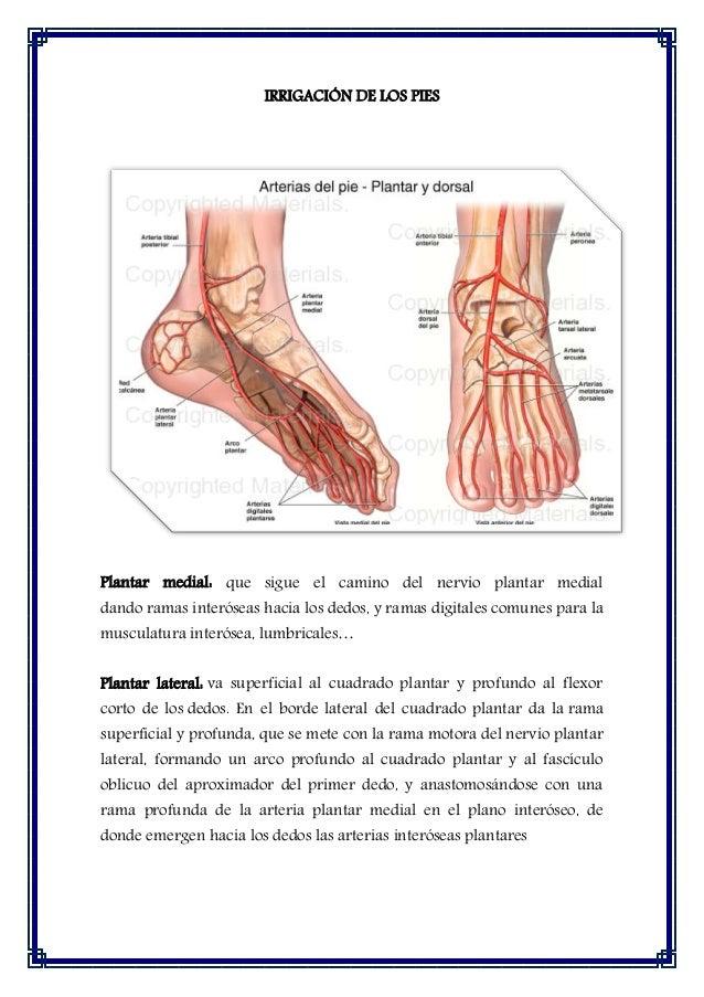 Arcos de arterias de manos y pies