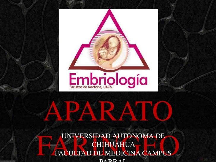 APARATO   UNIVERSIDAD AUTONOMA DEFARINGEO  CHIHUAHUA FACULTAD DE MEDICINA CAMPUS