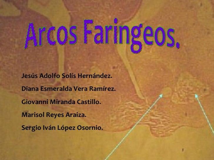 Arcos Faringeos. Jesús Adolfo Solís Hernández. Diana Esmeralda Vera Ramírez. Giovanni Miranda Castillo. Marisol Reyes Arai...