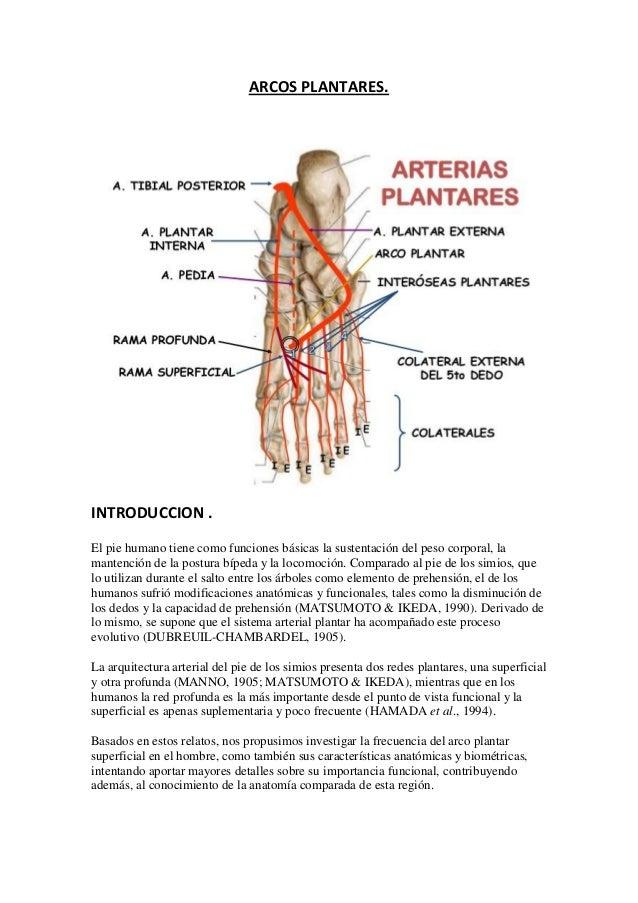 Atractivo Arcos De La Anatomía Del Pie Molde - Imágenes de Anatomía ...