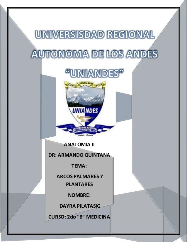 Arcos palmares y plantares- ANATOMIA II Uniandes