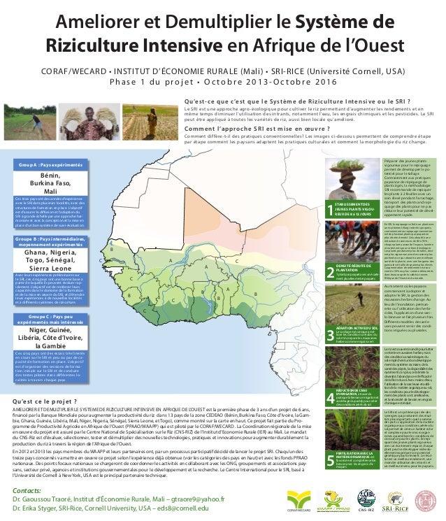 Ameliorer et Demultiplier le Système de Riziculture Intensive en Afrique de l'Ouest CORAF/WECARD • INSTITUT D'ÉCONOMIE RUR...