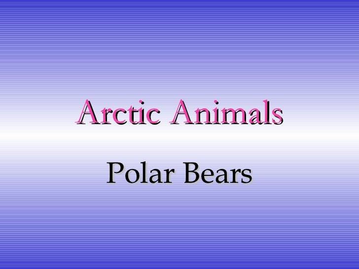 Arctic Animals Polar Bears