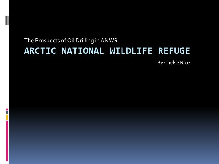 The Prospects of Oil Drilling in ANWR ARCTIC NATIONAL WILDLIFE REFUGE                                         By Chelse Ri...