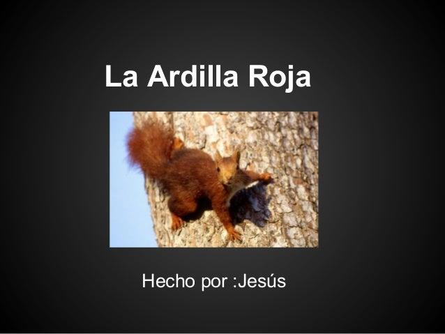 La Ardilla Roja  Hecho por :Jesús