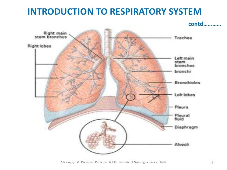 INTRODUCTION TO RESPIRATORY SYSTEM                                                                                     con...