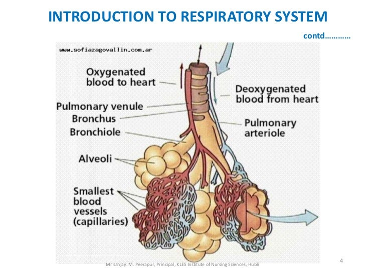 INTRODUCTION TO RESPIRATORY SYSTEM                                                                                      co...