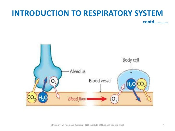 INTRODUCTION TO RESPIRATORY SYSTEM                                                                                       c...