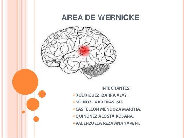 AREA DE WERNICKE              INTEGRANTES :  RODRIGUEZ IBARRA ALVY.  MUNOZ CARDENAS ISIS.  CASTELLON MENDOZA MARTHA.  ...