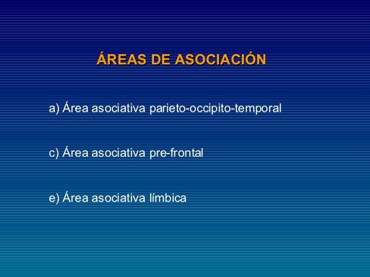 ÁREAS DE ASOCIACIÓN  <ul><li>Área asociativa parieto-occipito-temporal  </li></ul><ul><li>Área asociativa pre-frontal  </l...