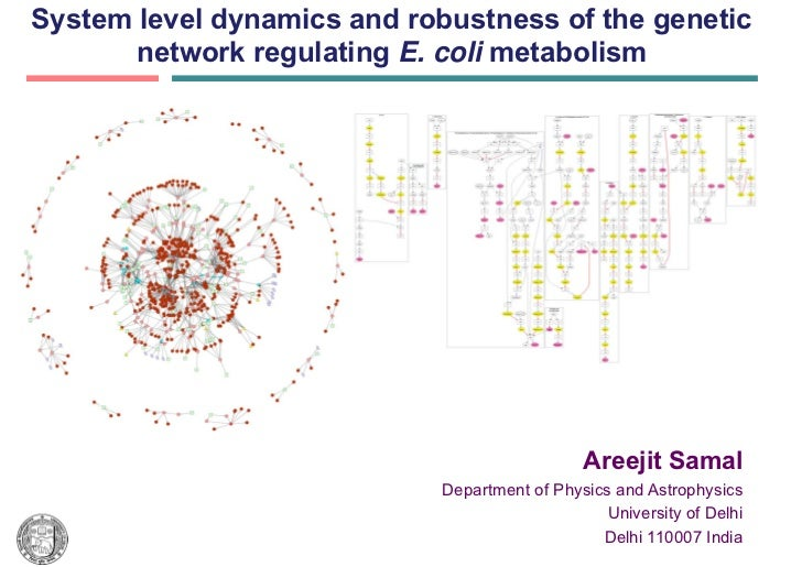 System level dynamics and robustness of the genetic       network regulating E. coli metabolism                           ...