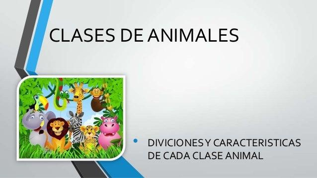 CLASES DE ANIMALES • DIVICIONESY CARACTERISTICAS DE CADA CLASE ANIMAL