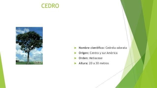 Arboles maderables - Lista nombre arbustos ...