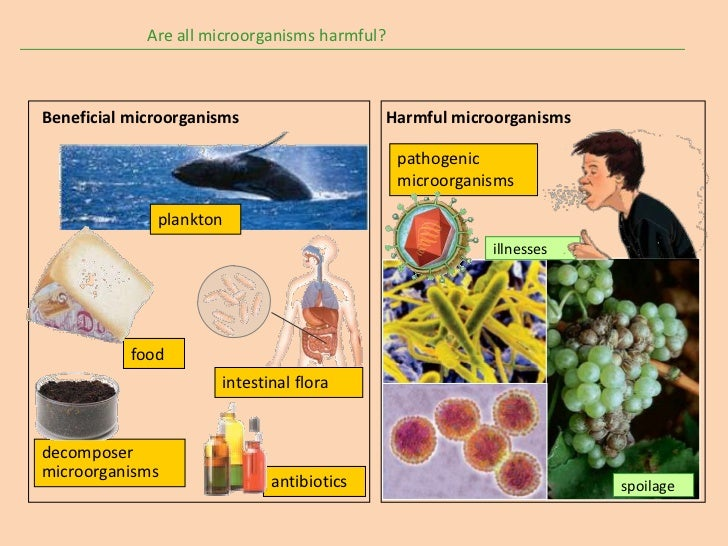 is carisoprodol harmful microorganisms foods