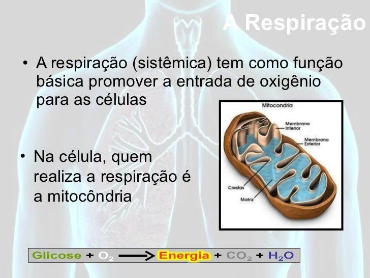 <ul><li>A respiração (sistêmica) tem como função básica promover a entrada de oxigênio para as células </li></ul>A Respira...