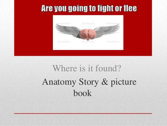 Where is it found?Anatomy Story & picture      book