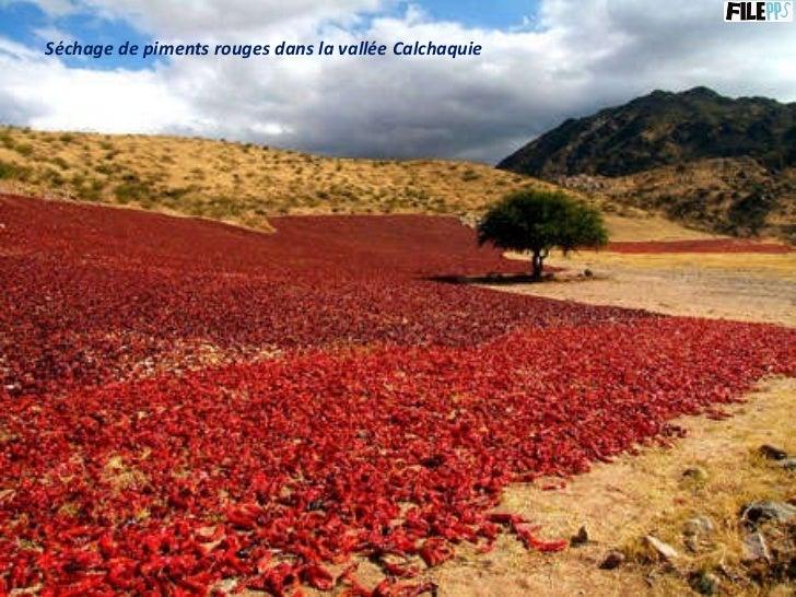 Séchage de piments rouges dans la vallée Calchaquie
