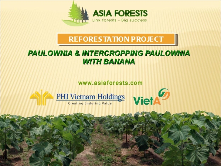 PAULOWNIA & INTERCROPPING PAULOWNIA WITH BANANA Asia Reforestation Group Inc,. REFORESTATION PROJECT www.asiaforests.com
