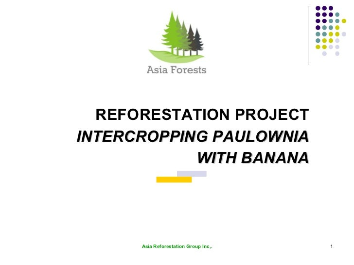 REFORESTATION PROJECT INTERCROPPING PAULOWNIA WITH BANANA Asia Reforestation Group Inc,.