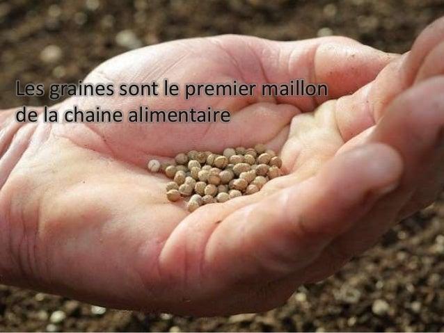 Les graines sont le premier maillon de la chaine alimentaire