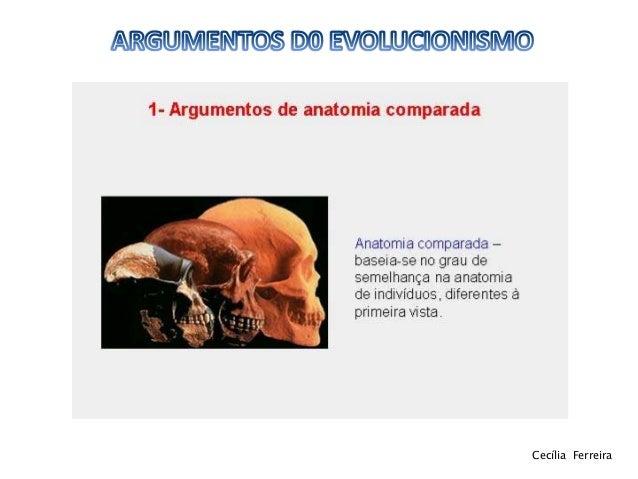 Argumentos do evolucionismo 11ºbg Slide 3
