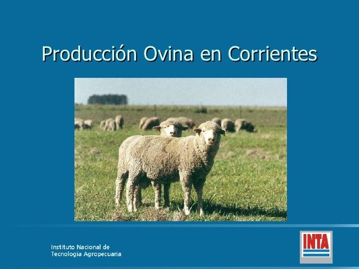 Producción Ovina en Corrientes