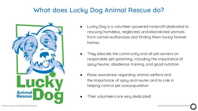 Episode 19 – Arielle Wait, Lucky Dog Animal Rescue