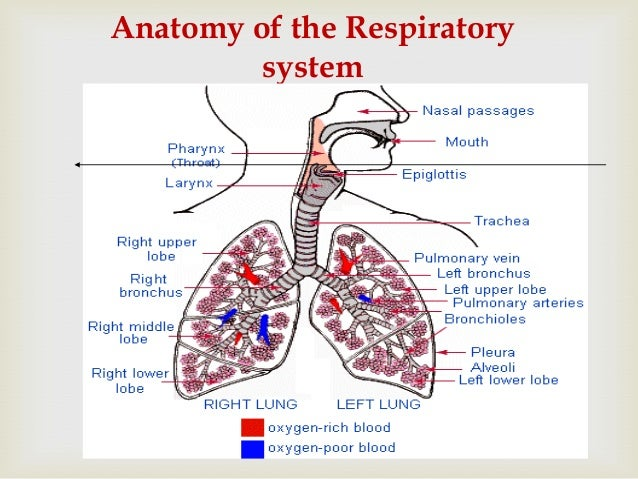 acute respiratory tract infection