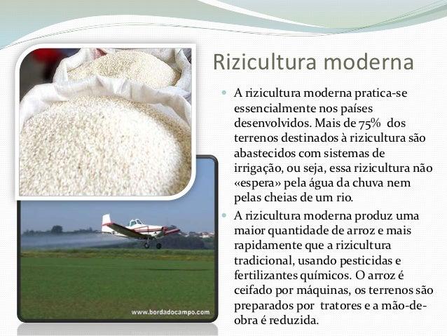 A rizicultura for Cocinar 6 tipos de arroz