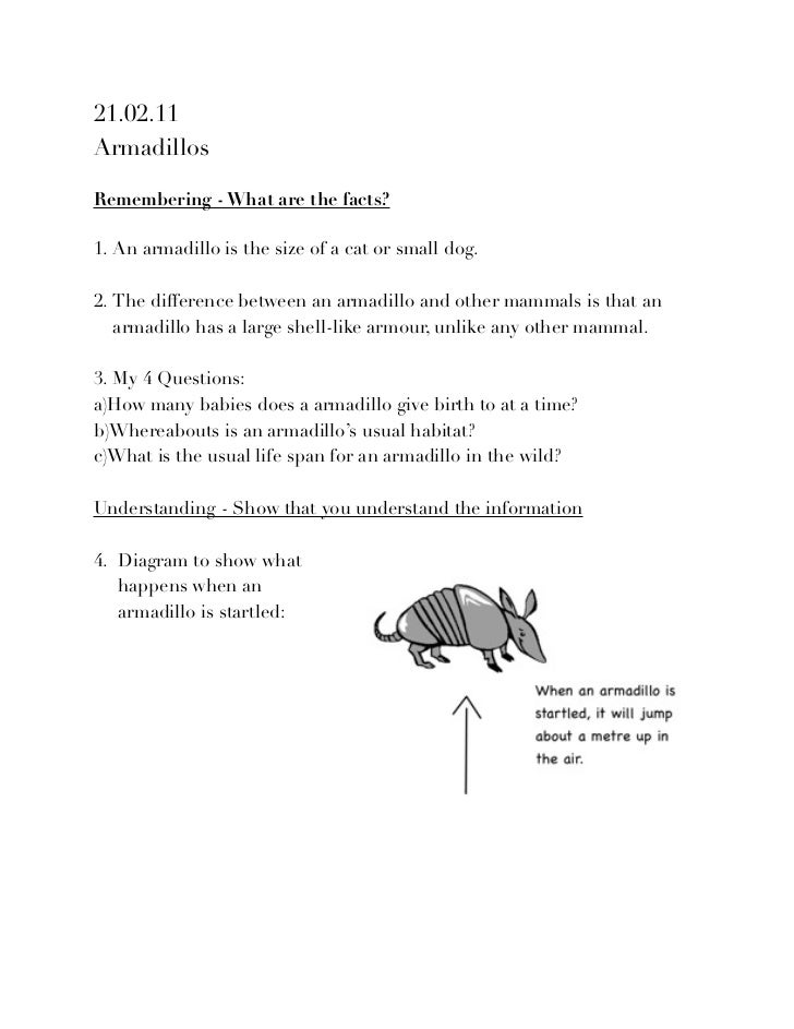 dead armadillos poem