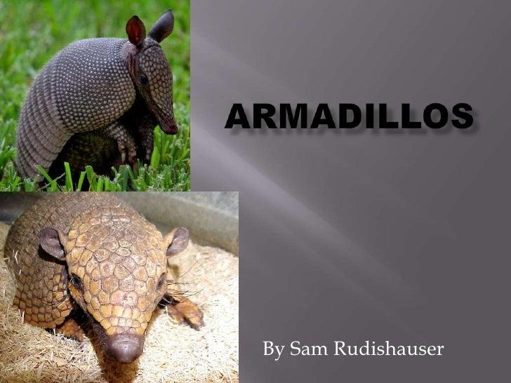 Armadillos<br />By Sam Rudishauser<br />