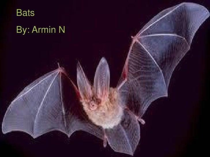 BatsBy: Armin N              Bats