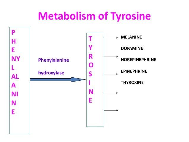 Aromatic Amino Acid Metabolism By Dr Anita Verma