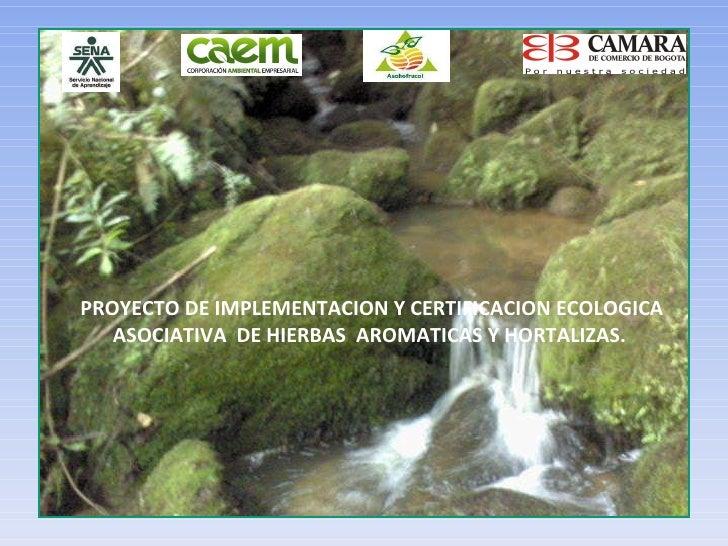 PROYECTO DE IMPLEMENTACION Y CERTIFICACION ECOLOGICA ASOCIATIVA  DE HIERBAS  AROMATICAS Y HORTALIZAS.
