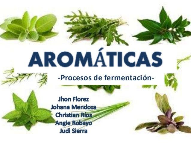 plantas arom ticas y procesos de fermentaci n
