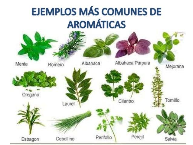 Plantas arom ticas y procesos de fermentaci n for Que son plantas ornamentales ejemplos