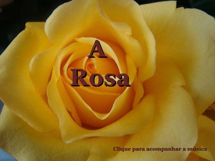 A  Rosa Clique para acompanhar a música