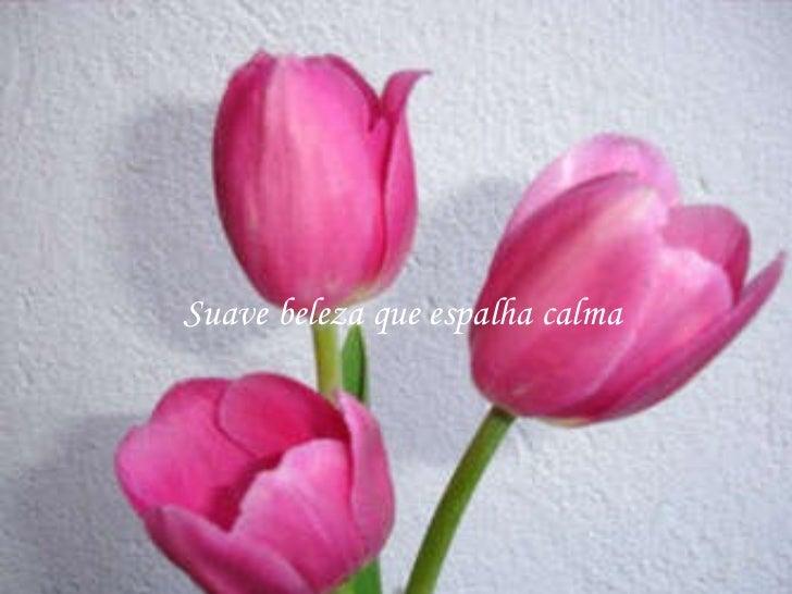 A rosa mais linda Slide 3