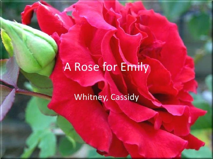 a rose for emily changing Abstract: in his renowned short story, a rose for emily, the master artist william faulkner verbally paints the portraits of a tragic woman, miss emily.