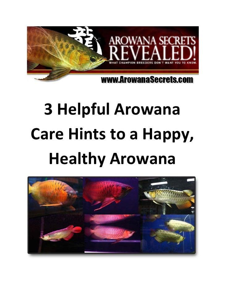 3 Helpful Arowana Care Hints to a Happy,   Healthy Arowana