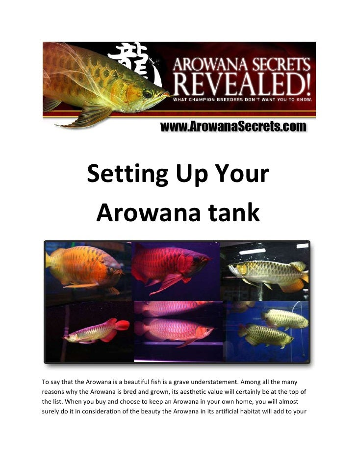 Setting Up Your Arowana tank<br />To say that the Arowana is a beautiful fish is a grave understatement. Among all the man...