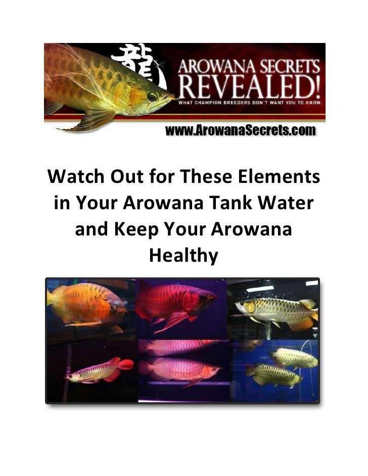 Watch Out for These Elements in Your Arowana Tank Water and Keep Your Arowana Healthy<br />Arowana tank water is the prima...