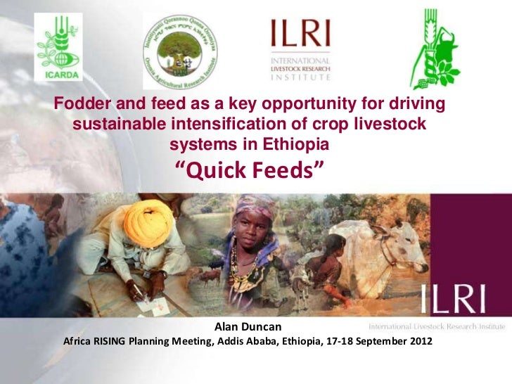 Fodder and feed as a key opportunity for driving  sustainable intensification of crop livestock              systems in Et...