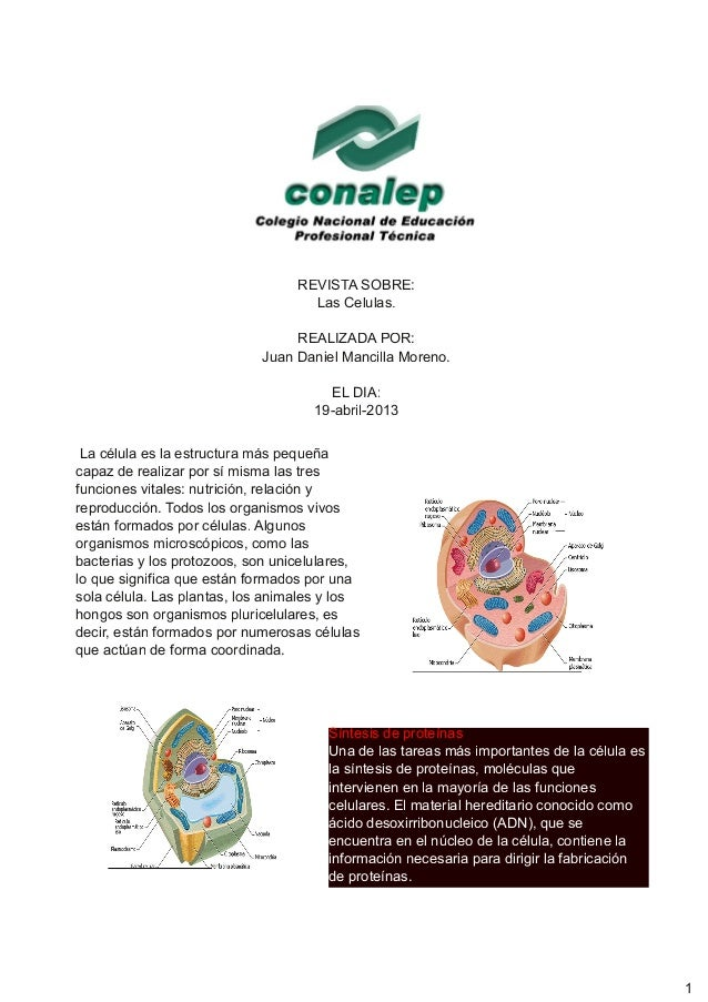 REVISTA SOBRE:Las Celulas.REALIZADA POR:Juan Daniel Mancilla Moreno.EL DIA:19-abril-2013Síntesis de proteínasUna de las ta...